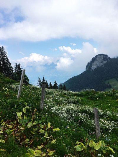 Alpenmysrik Landscape Switzerland Klewenalp Lake Lucerne Plant Cloud - Sky Sky Nature Beauty In Nature