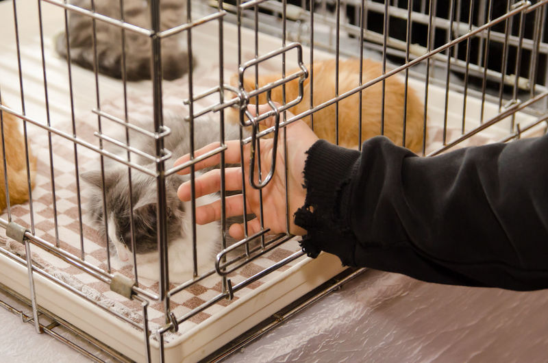 High angle view of person hand in cage