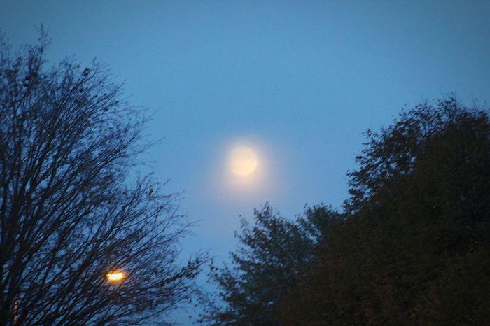 Beaver moon Moon Tree Astronomy Nature Sky Outdoors Beauty In Nature Illuminated Nature No People Beavermoon