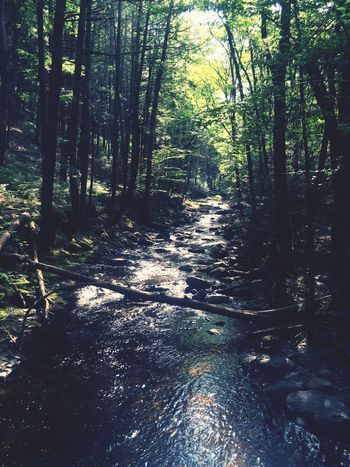 Up stream Forest WoodLand Non-urban Scene Tranquil Scene Tranquility Beauty In Nature Nature