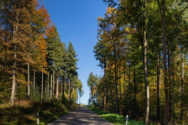 Tree Plant Direction The Way Forward Road vanishing point Outdoors Diminishing Perspective Autumn Change Nature Sky No People Day Beauty In Nature Treelined Green Color Clear Sky Street Autumn colors