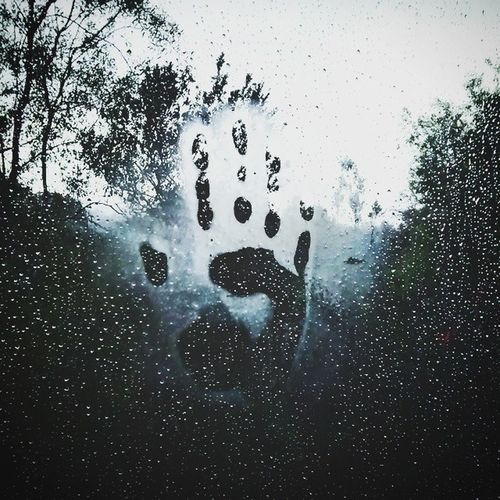 Hand MyTripHand TripHands Forest Rain Trees Tree Water Rainy Raining Nature Cool Awesome Myhand Handselfie Photography Photograph Photographysouls Enlargemyphoto Visualauthority Mypic MyEdit Allme HumansMagazine JustLiving2015 humanscreative