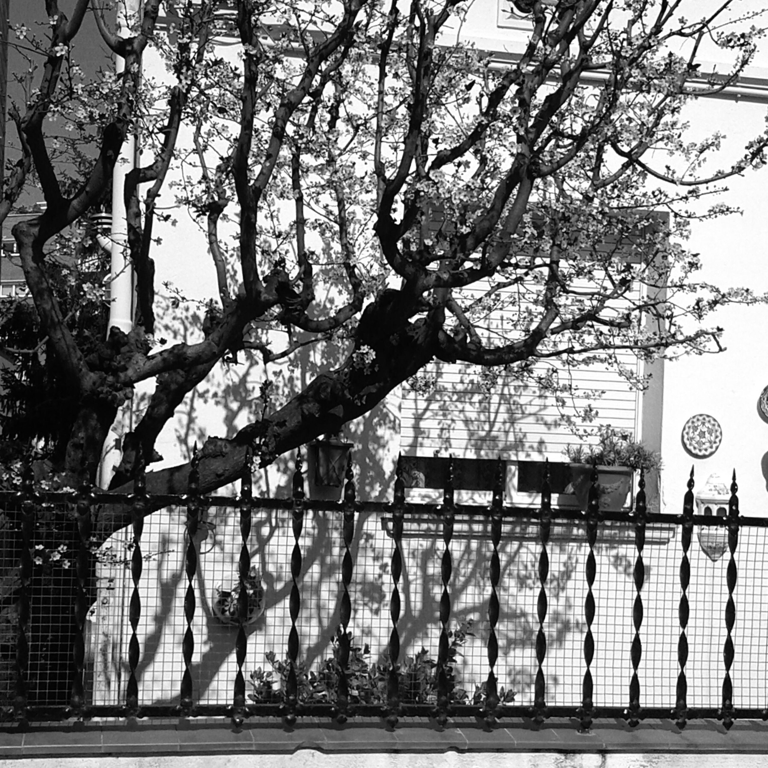 tree, bare tree, branch, built structure, building exterior, architecture, railing, fence, metal, gate, bicycle, safety, protection, day, no people, outdoors, security, street light, transportation, house
