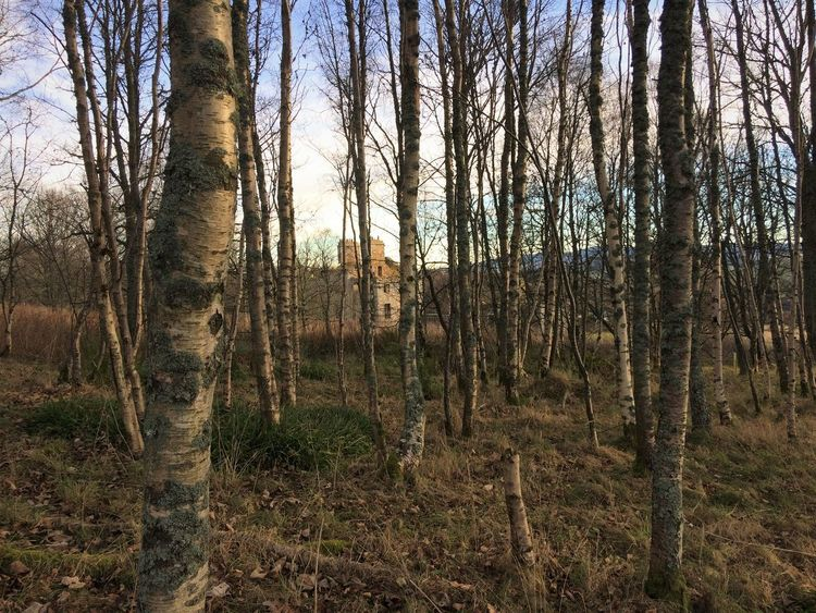 Abandoned Buildings Aberdeenshire Bark Beauty In Nature Day Forest Growth Haunted Landscape Nature No People Outdoors Scenics Silver Birch Silver Birch Trees Sky Through The Trees Tranquil Scene Tree Tree Trunk Wood
