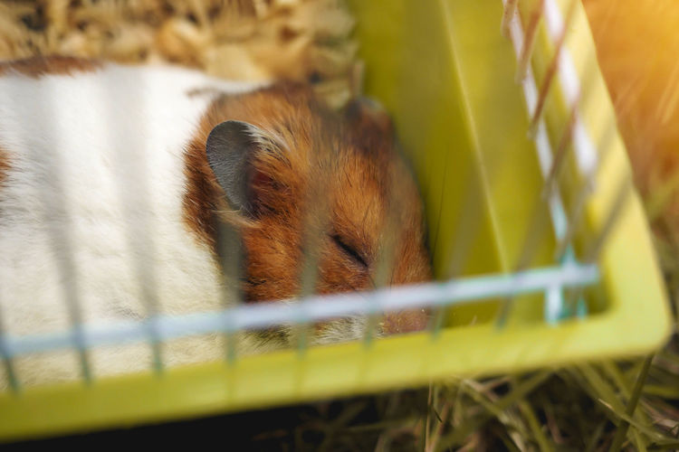 Mammal Animal Themes Animal One Animal Animal Wildlife Rodent Cage Vertebrate Selective Focus Animals In The Wild No People Close-up Animals In Captivity Nature Day Animal Body Part Plant Outdoors Pets Relaxation Animal Head  Hamster Sleeping Cute Wildlife