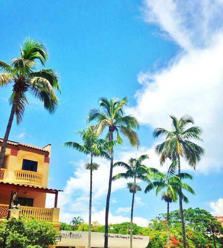Palm Trees Crystal Clear Blue Sky EyeEm Best Shots EyeEm Nature Lover Florida Naples United States