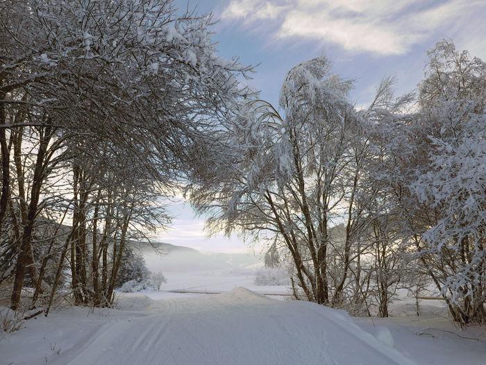 Frozen Bare Tree Cold Temperature Foggy Landscape Scenics Snow Tranquil Scene Val Pusteria White Winter