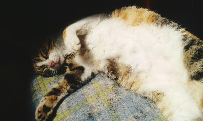One Animal Feline Domestic Cat Day No People Cat♡ EyeEmNewHere