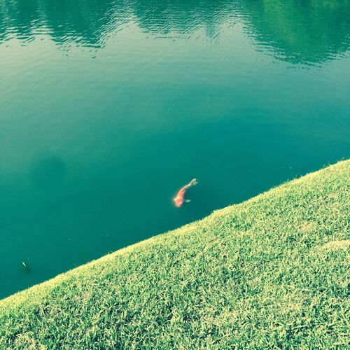 High Angle Vie Of Fish In Lake