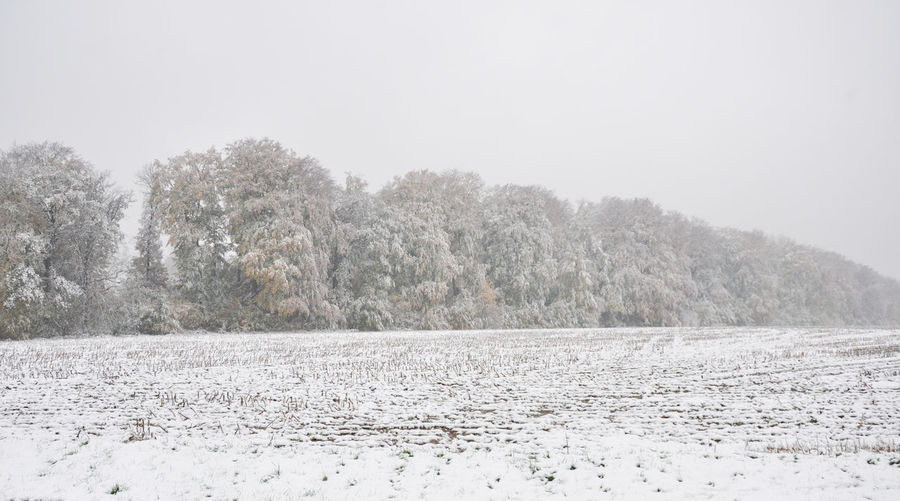 Autumn Leaves Field Autumn Season Beauty In Nature Cold Cold Temperature Early Snowfall Edge Of Forest No People Snow Snow Covered Landscape Snowfall Snowing Tranquility Tree Weather