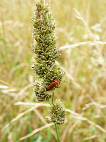Beauty In Nature Flower Grass Green Color Insect Nature Outdoors Plant Rouge