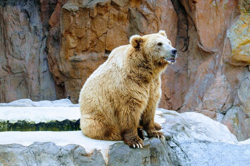 熊 Bear Cold Temperature Winter Rock - Object Grizzly Bear Polar Bear EyeEmNewHere