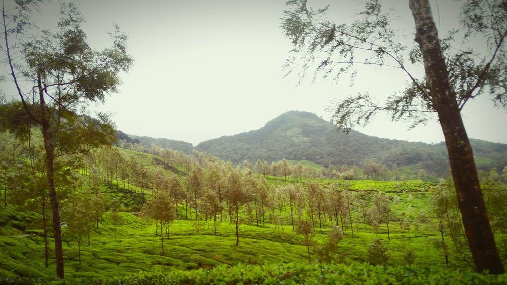 Munnar Kerala Beauty In Nature Tranquil Scene Mountain Coffeeplantation