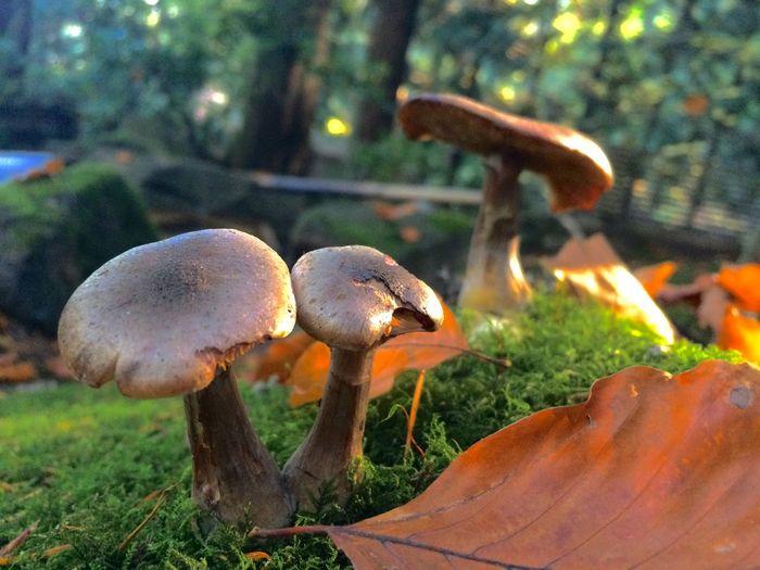 Mushrooms Close