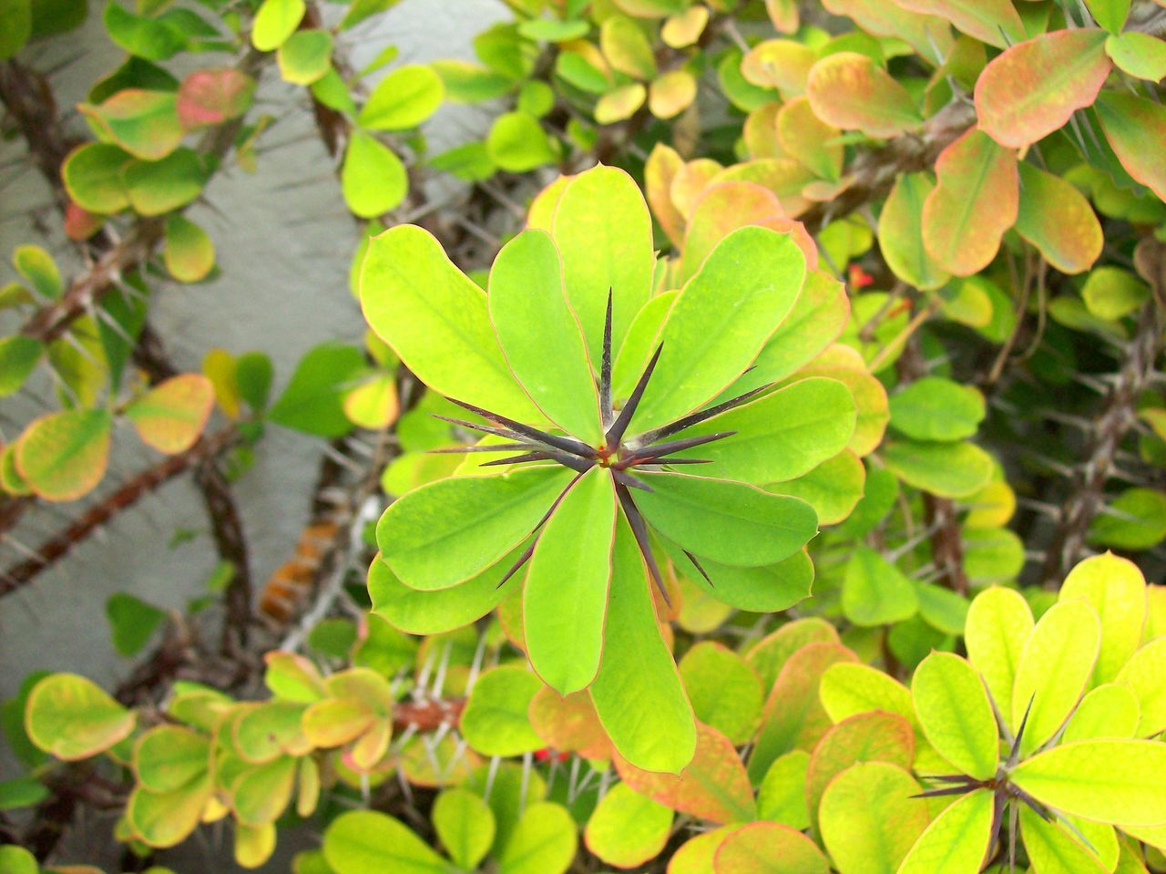 leaf, growth, green color, plant, nature, day, freshness, beauty in nature, outdoors, no people, fragility, close-up, flower, flower head, periwinkle