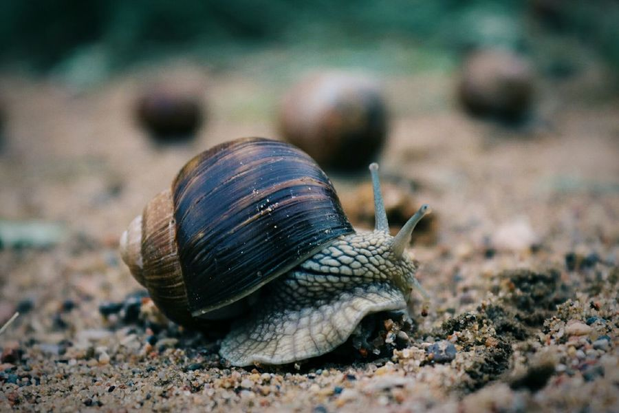 EyeEm Selects One Animal Animal Wildlife Animal Animals In The Wild Sand Nature Outdoors Animal Themes No People Close-up Beauty Getting Inspired Beauty In Nature EyeEm Gallery Eyeemphotography Taking Pictures Nature Snail Snails Nature Photography Snail Shell Close Up Nature_collection Snail🐌 Eye4photography