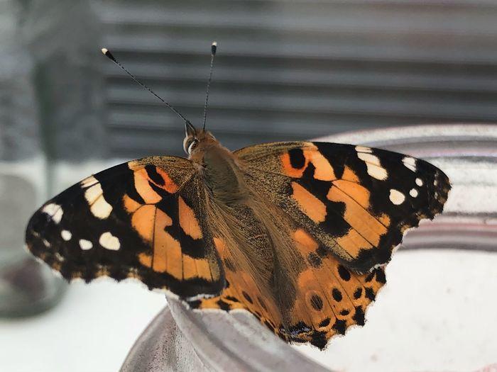 Vlinder EyeEm