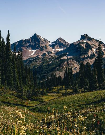 Hiking the Paradise trail in Mount Rainier National Park Mountain Nature Mountain Range Scenics Clear Sky Tranquil Scene Beauty In Nature Day Tranquility Sky Outdoors Landscape