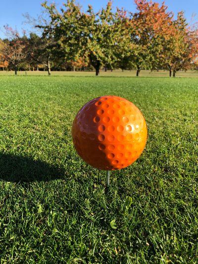 Golf Course Plant Tree Grass Orange Color