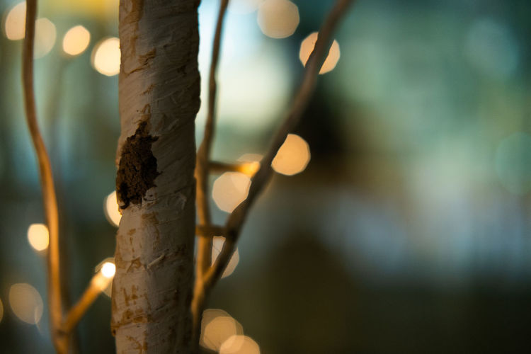Beautiful little tree Focus On Foreground Close-up Tree Trunk No People Plant Trunk Tree Nature Selective Focus Day Outdoors Wood - Material Tranquility Sunlight Lens Flare Growth Textured  Illuminated Beauty In Nature Bamboo - Plant Blurred Background Lights Copy Space