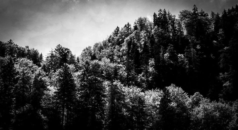 Alps Backlight Bavarian Bavarian Alps Blackandwhite Nature Bw Nature Canon350D Deep In The Woods EyeEm Nature Lover Heads Hiking Hiking Bavaria Hills Formation Königssee Monochromatic Monochrome Monochrome _ Collection Monochrome Nature Mountains Natural Formation Natural Pattern Top Of The Tree Treetops Trekking Woods