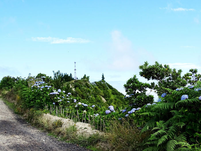 Landscape Beauty In Nature Azores Hortensia Tree Sky Cloud - Sky Green Color Blooming In Bloom Countryside Plant Life