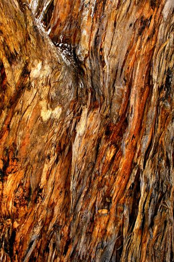 Flaking tree bark in late afternoon sunlight Bark Abstract Backgrounds Close-up Day Flaking Full Frame Nature No People Outdoors Pattern Textured  Tree Tree Bark Close Up Tree Bark Colors Tree Bark Patterns Tree Bark Texture Wood - Material