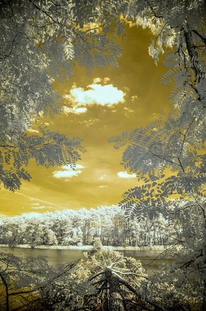 Infrared Beauty In Nature Day Nature No People Outdoors Scenics - Nature Tranquil Scene Tranquility