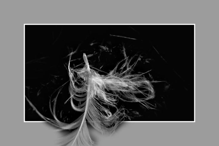 Feather and fluff ... Feather  Bw_collection Fun Edit Beauty In Nature Fortheloveofblackandwhite