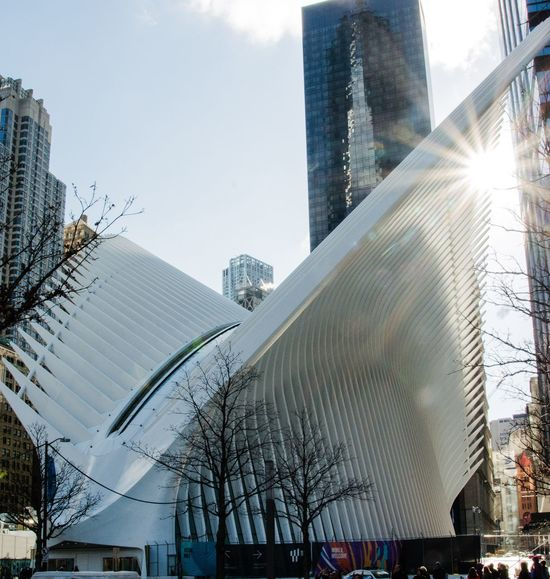 The Oculus Oculus Architecture Built Structure City Building Exterior Tree WhiteSky Skyscraper No People Day SunriseLow Angle View Outdoors