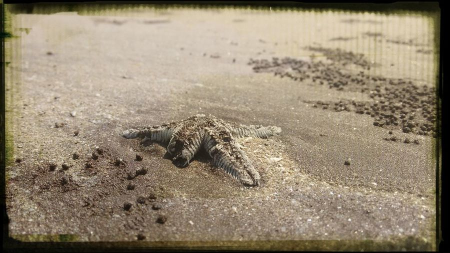 Star fish First Eyeem Photo