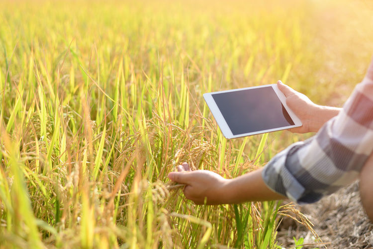 Technology Wireless Technology Communication Human Body Part Connection Plant One Person Computer Portability Hand Field Digital Tablet Human Hand Land Grass Adult Nature Holding Rural Scene Using Computer Global Communications Body Part Outdoors Tablet Rice Paddy