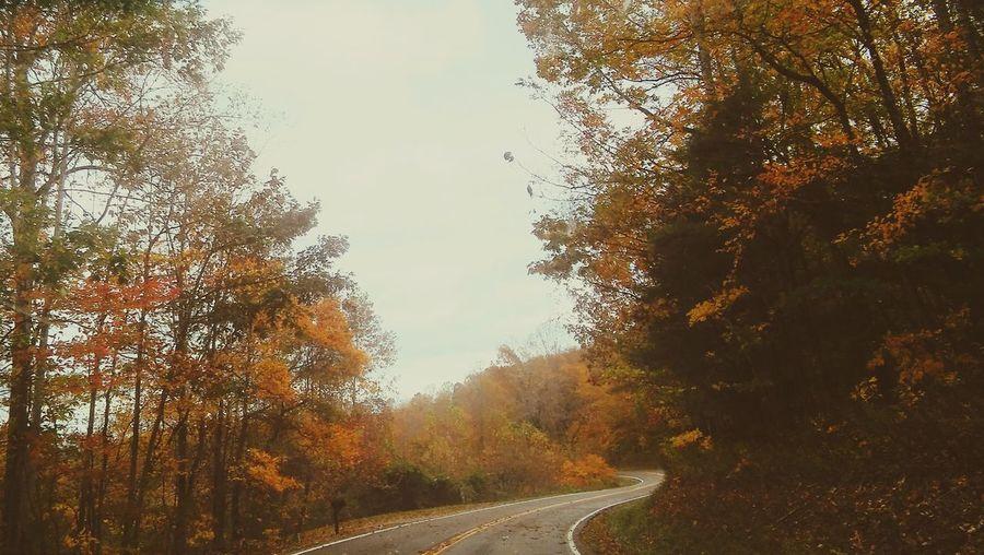 Fall Leaves Fall Colors Fall Weather November Sky November Wind November Chills Love The Fall Season