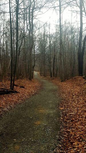 WPT WPT Bikelife Pennsylvania Trail Outdoors Bike Ride Biking Beauty In Nature Nature Rail Trail