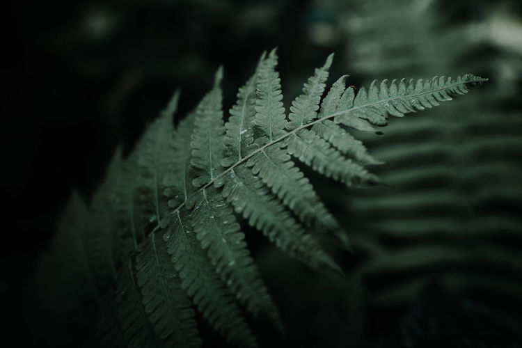 Beauty In Nature Close-up Day Fern Focus On Foreground Fragility Green Color Growth Leaf Leaf Vein Leaves Natural Pattern Nature No People Outdoors Pattern Plant Plant Part Purity Selective Focus Water