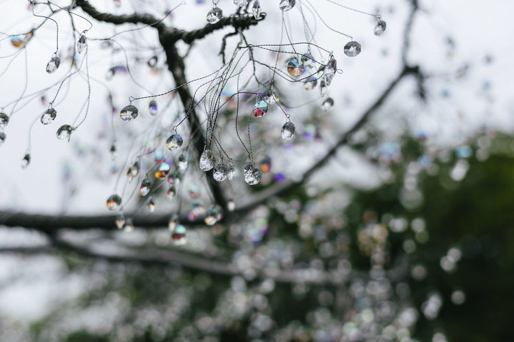 Close-up of raindrops on tree branches