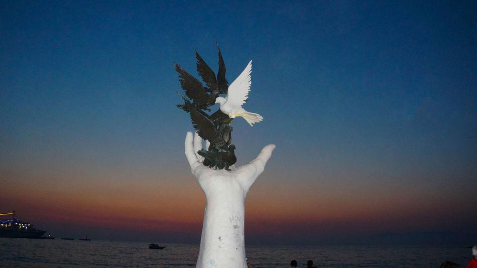 Art Bird Clear Sky Kusadasi Kuşadası Outdoors Peace Pigeon Seagull Summer Sunset Travel
