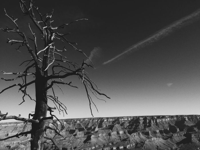 Barbed Wire Bare Tree Branch Clear Sky Day Dead Plant Dry Grandcanyon Light Majestic Mystery Nature No People Outdoors Protection Sharp Tranquility Tree Tree Trunk Weather
