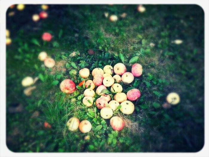 Livenearyou Taking Photos Apple