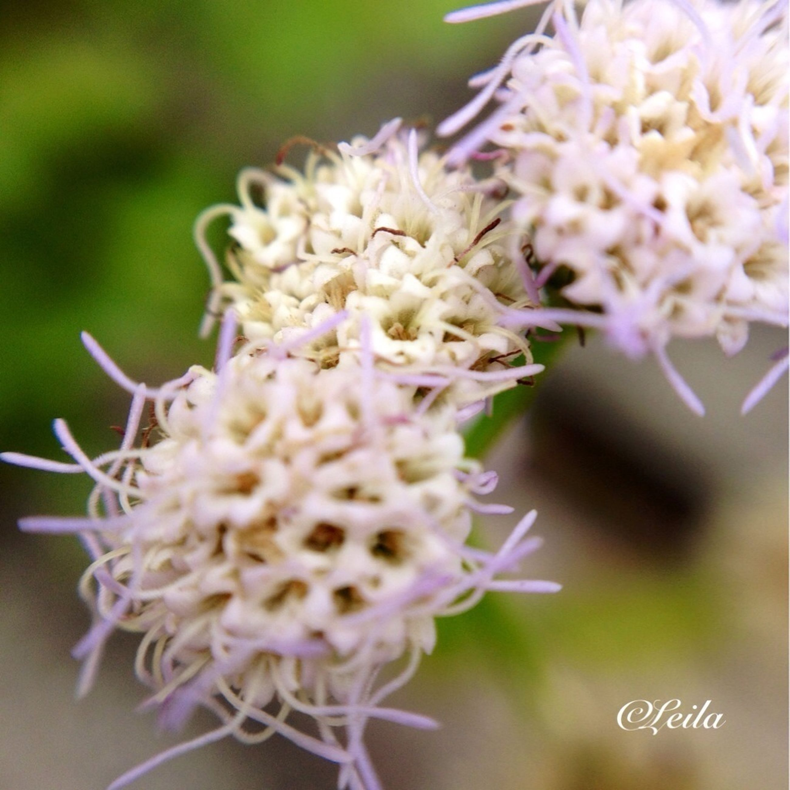 flower, freshness, fragility, close-up, growth, focus on foreground, petal, flower head, beauty in nature, nature, selective focus, plant, bud, blooming, stem, blossom, springtime, botany, in bloom, day