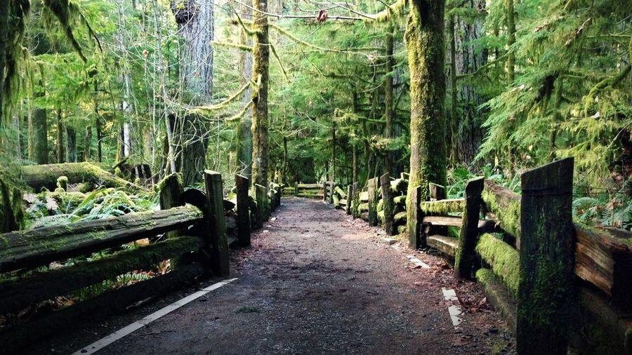 IPhoneography Pathways British Columbia Vancouver Island