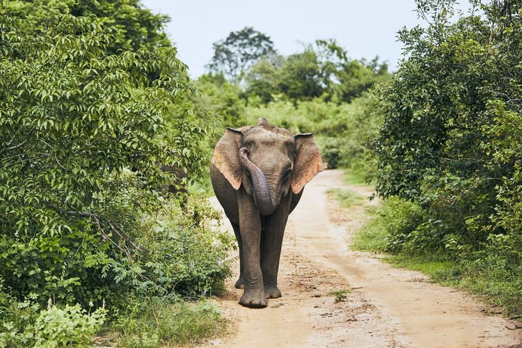 Elephant walking in forest