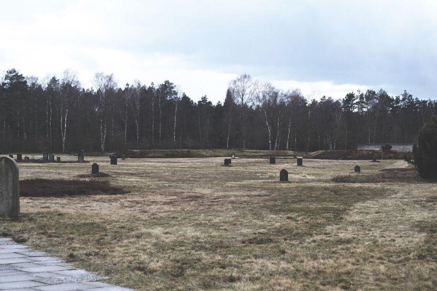 Death Woods World War 2 Ww2 Germany Memories Dead