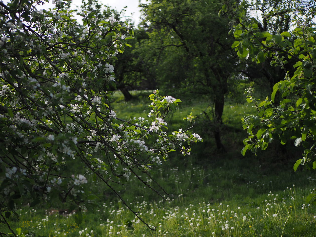 VIEW OF FLOWERING PLANTS IN SUNLIGHT