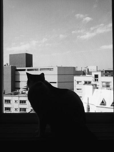Cat Catstagram