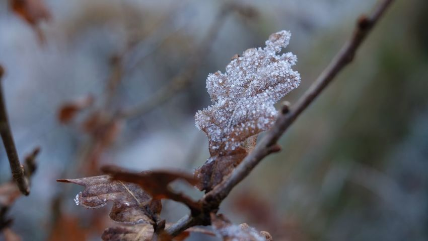 Frozen leave 😬 cold days Copy Space EyeEm Selects Cold Temperature Close-up Winter Snow Focus On Foreground Plant No People Beauty In Nature Day Growth Frozen Ice Selective Focus Nature Frost Tree Fragility Outdoors Vulnerability  Dead Plant