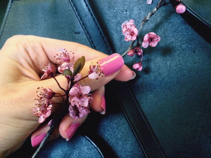 Cropped hand holding flower over bag