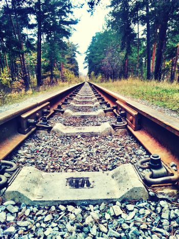 Tree Railroad Track The Way Forward Nature No People Rail Transportation Day Transportation Outdoors Growth Beauty In Nature