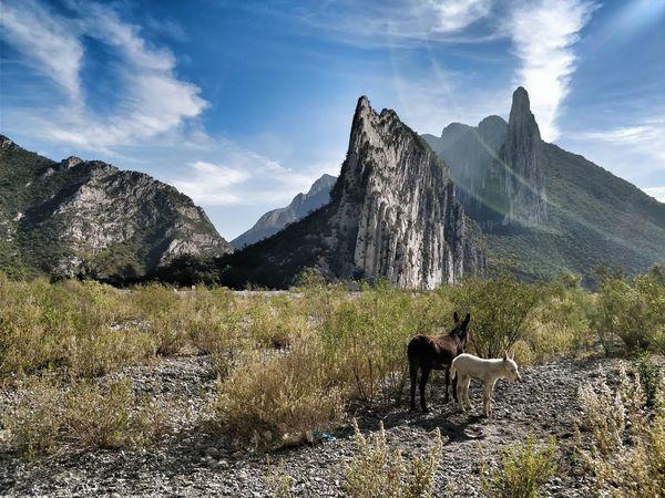 Huasteca Huasteca Huasteca Nuevo Leon Mountain Nature Cloud - Sky Outdoors No People Domestic Animals Sky Landscape Mountain Range Beauty In Nature