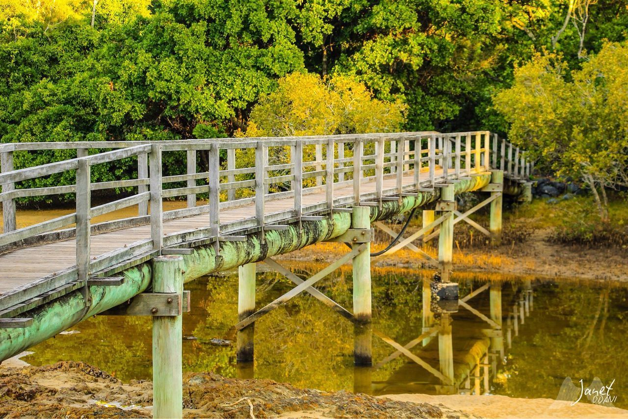 tree, plant, water, nature, day, railing, no people, built structure, architecture, outdoors, bridge, connection, growth, bridge - man made structure, forest, autumn, land, green color, river